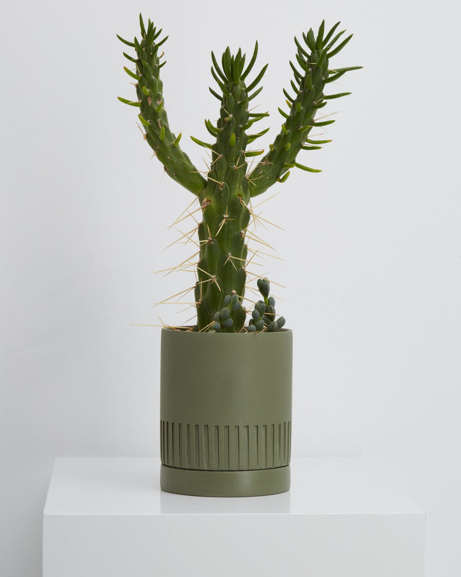 Agave Etch Planter