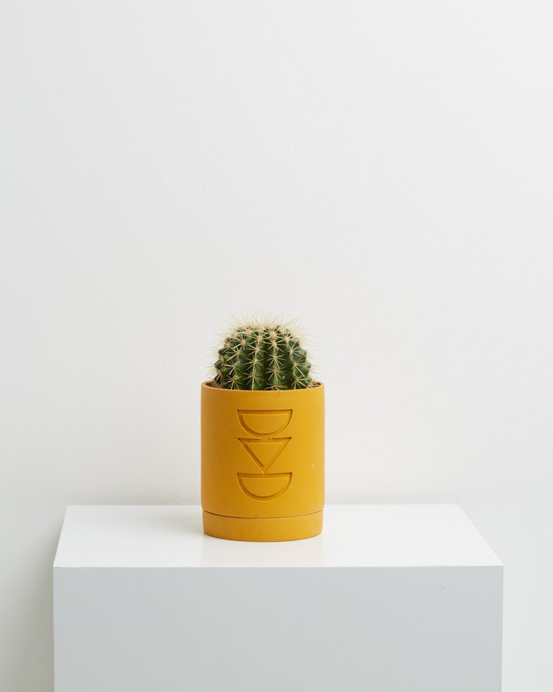 Golden Etch Planter