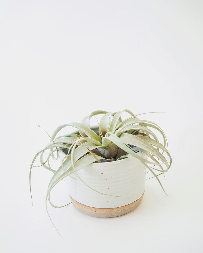 Hand-thrown Ceramic Planter