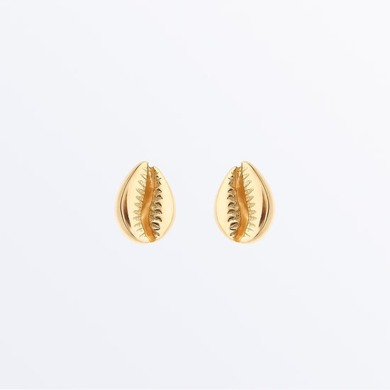 Ana Luisa Earrings Studs Delicate Earrings Shell Earrings Cowrie
