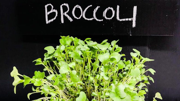 Why Broccoli Sprouts Might Actually Be A Superfood