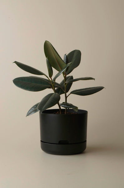 Mr Kitly Self Watering Pots - 250mm