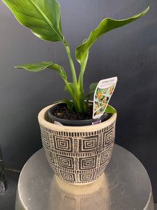 Black n White pot and plant