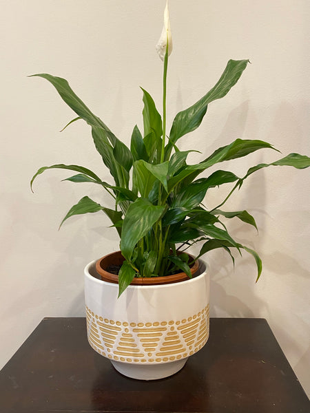 Planter Safara Large