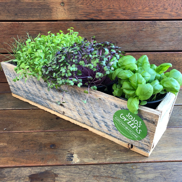 Rustic Wooden Window Box with 4 Live Herbs