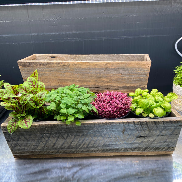 Wooden Window Box with 4 Herbs