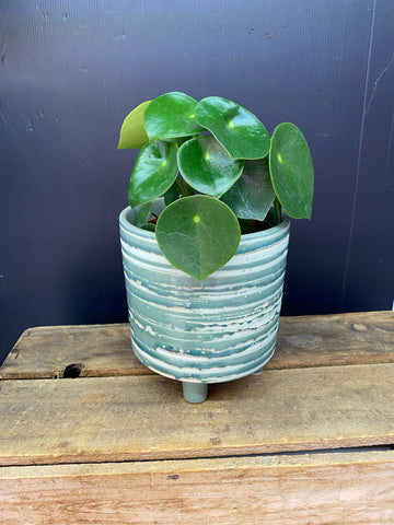 Pot/Planter - Avignon Mint