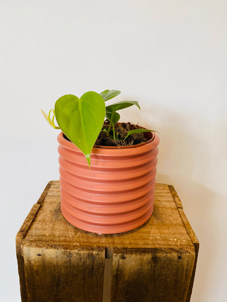 Sml Berlin Planter Rosewood with Plant 120mm