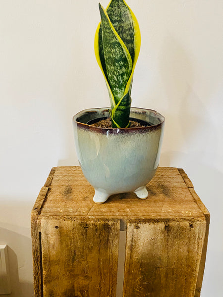 Milo Footed Plant Pot Hazelwood with 95mm Indoor Plant
