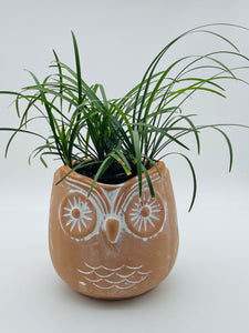 Terracotta Owl Planter with Mondo grass plant