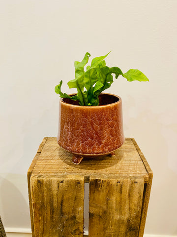 Kiku Footed Plant Pot Chestnut with plant