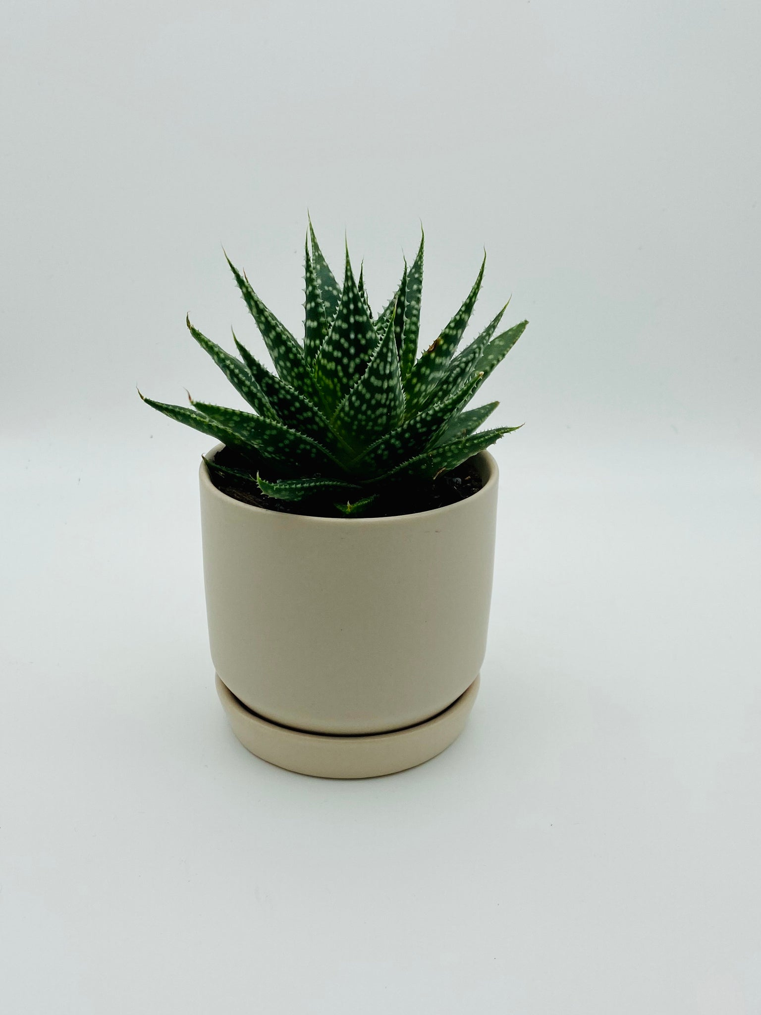 Little ceramic pot with saucer & Haworthia succulent (potted in)