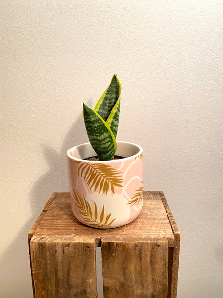 Palm Planter Pink Gold 11cm