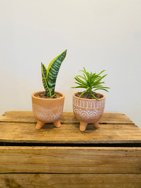 Set 2 Ceramic Rainbow Pots with plants