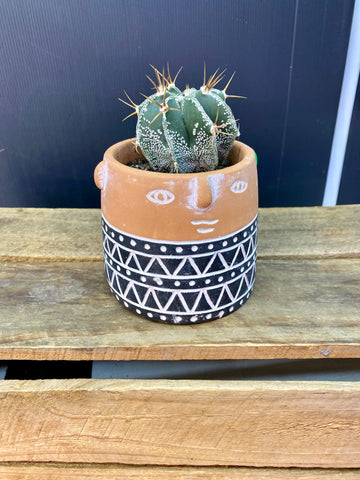 Terracotta face pot with spiked cactus planted in.