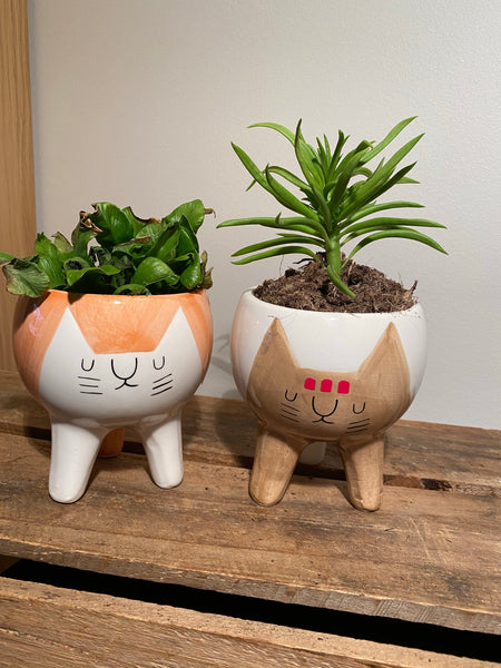 Kitty Cat Pots x 2