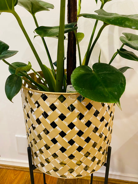 Large Metal Weave Cane Stilted Planter with Plant