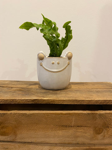 Planter Freckle Frog with plant