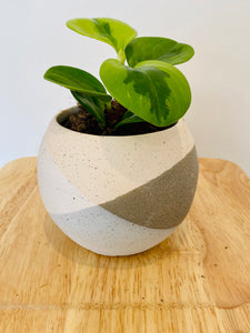 Round Planter with 95mm Indoor Plant