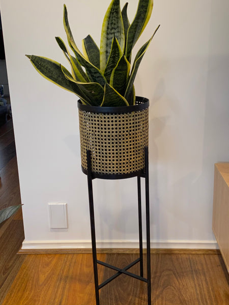 Rattan-Look Planter with Plant
