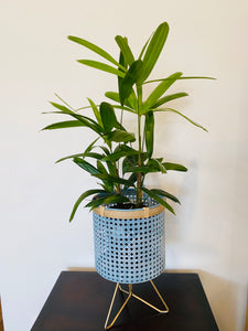 Gorgeous metal pale blue/gold planter with plant