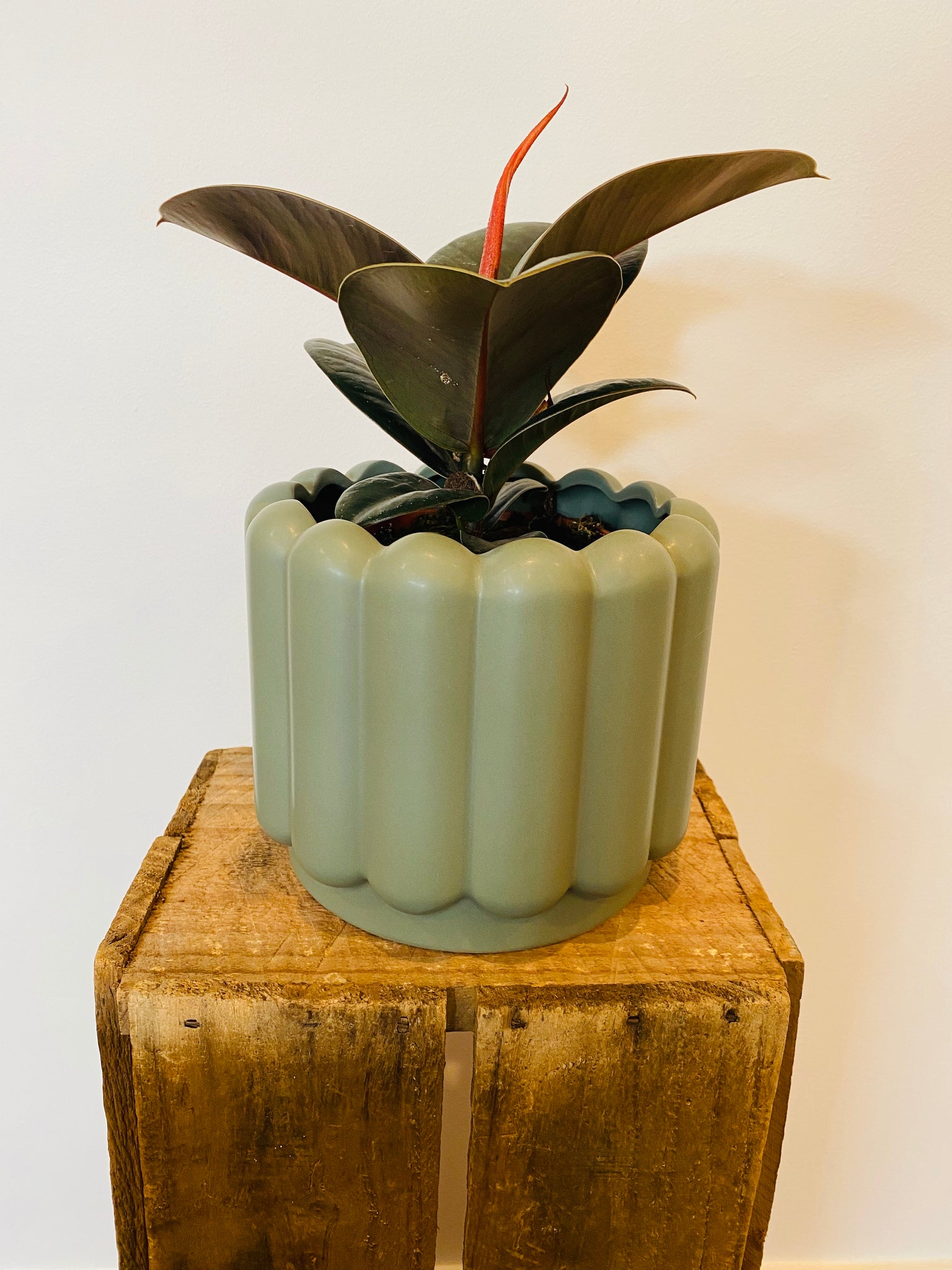 Vienna Planter Eucalypt with plant