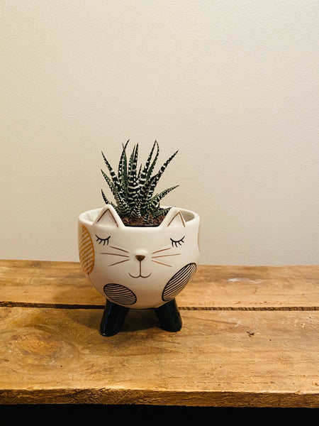 Black/Gold Cat Planter with Legs