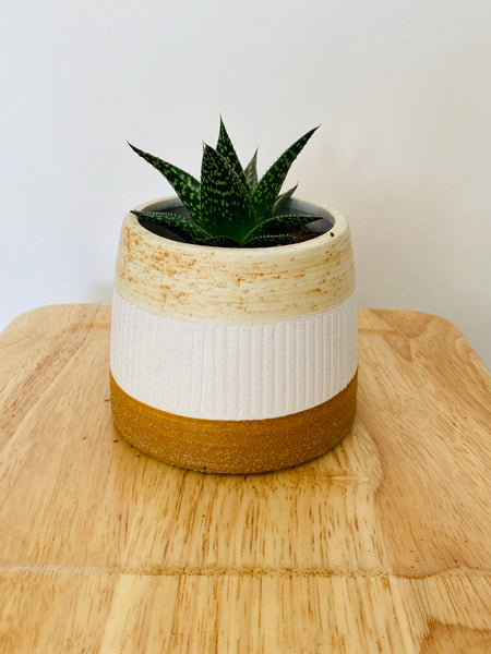 Neapolitan Planter with 95mm Indoor Plant