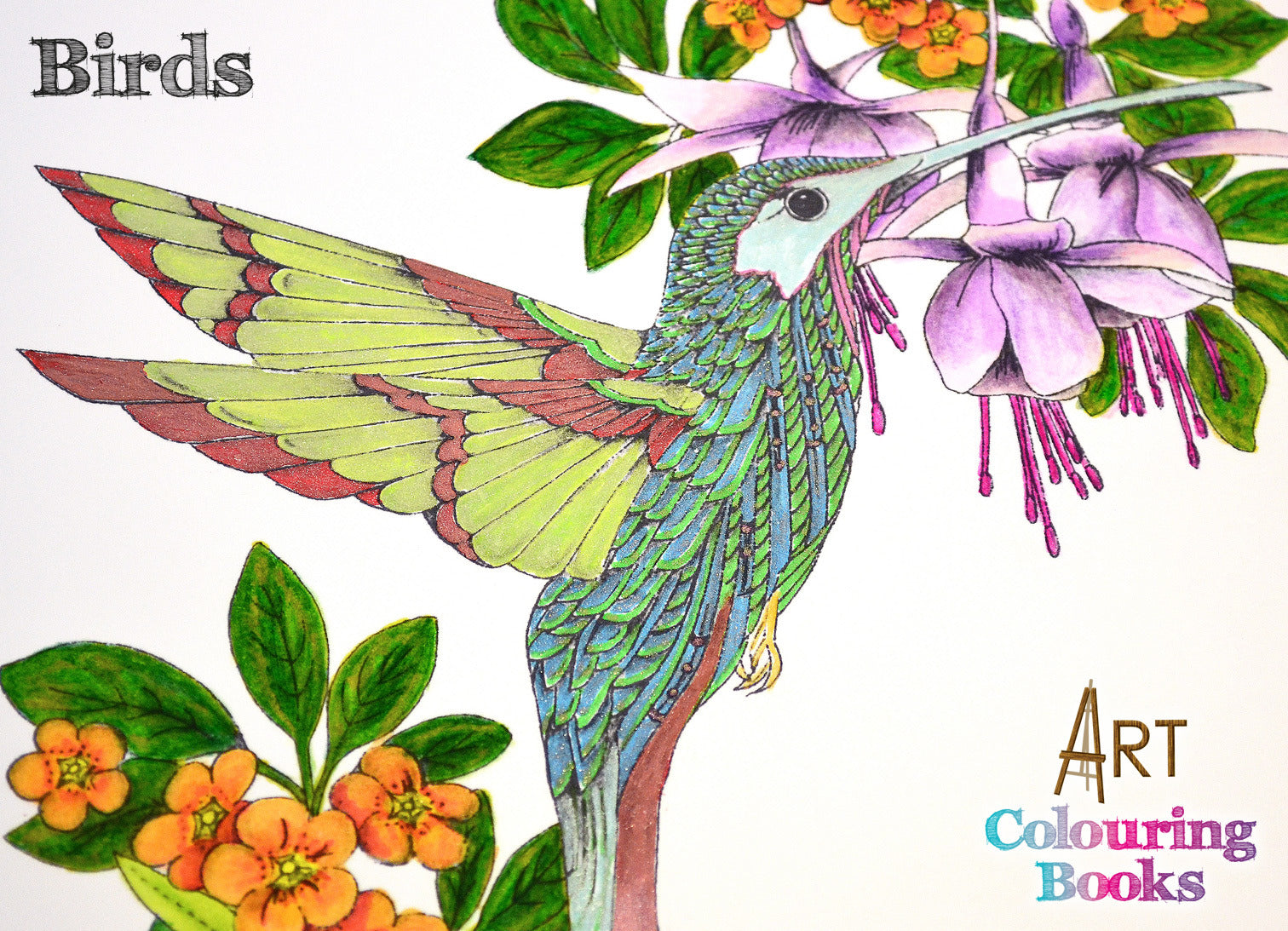 Birds Art Coloring Book | Katy Sue Designs – Katy Sue Designs US