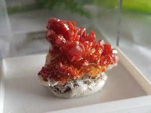 Vanadinite on Barite mineral specimen