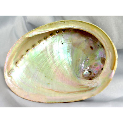 Abalone Shell for Smudging - large