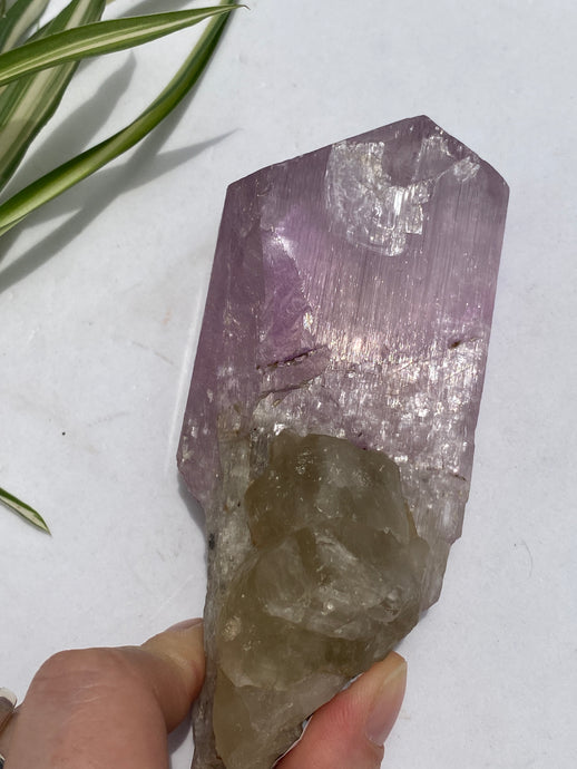 Kunzite bi-colour natural crystal - mineral specimen 317g