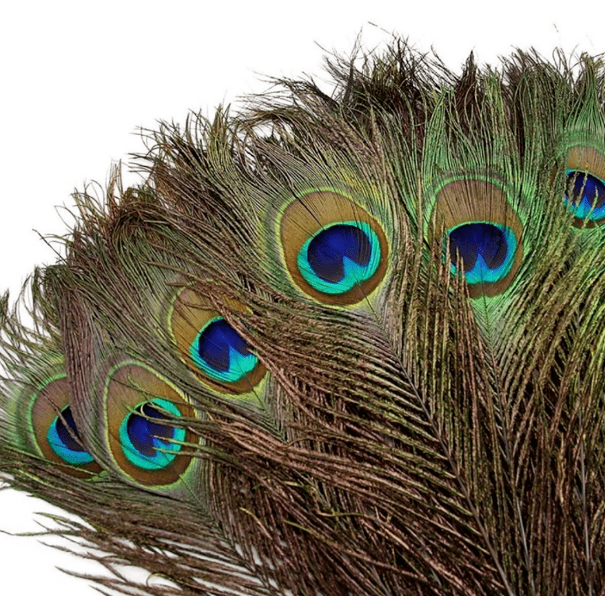 Peacock  - smudging feathers