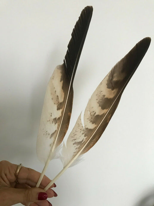 Snake Eagle feathers - smudging feathers - Nature's Magick