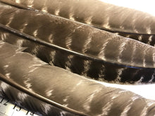 Wild Turkey Feathers - smudging feathers - Nature's Magick
