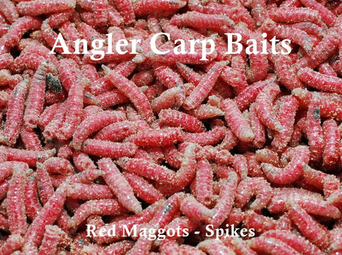 Red Maggots-Red Spikes-Live Red Maggots