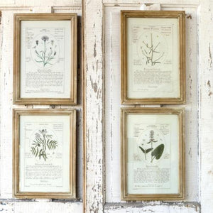 Notated Botanical Prints
