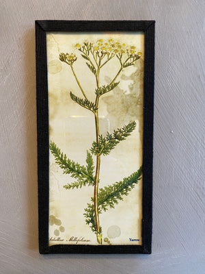 Vintage Herbal Specimen Frames
