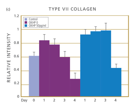 Collagen VII Production