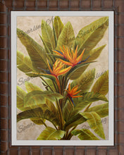 """Orange Bird of Paradise"" Giclée Reproduction"