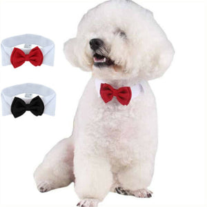 Pet Bow Tie-Collar Offer