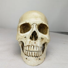 Human Head Resin Replica Medical Model Lifesize Halloween Home Decoration Decorative Craft Skull 22x15x17CM