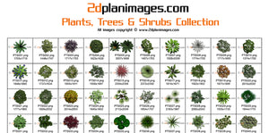 plants and trees collection, 2d plan images, 2d plan symbols,