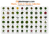 Plants, Trees & Shrubs Collection 3, top down view, overhead view, 2d colour floor plan, 2d plan images, isolated background
