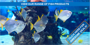 Singhms Retail Fish Products