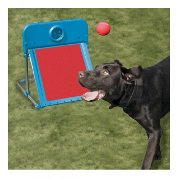 Agility Flyball Kit