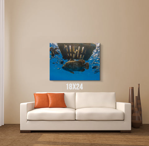 Fish Pallet Canvas