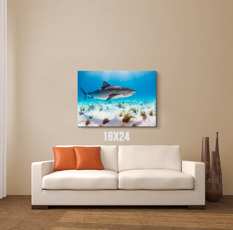 Sunlight Shark Canvas