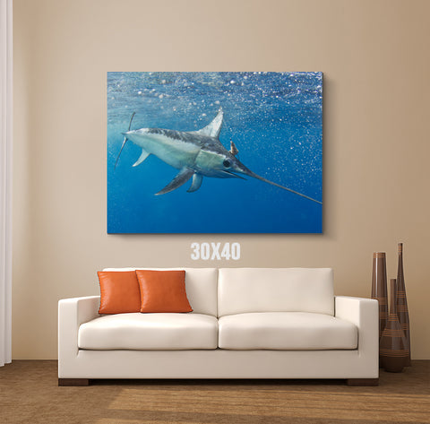 Swordfish Canvas