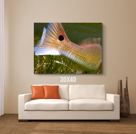 Fish Tail Canvas